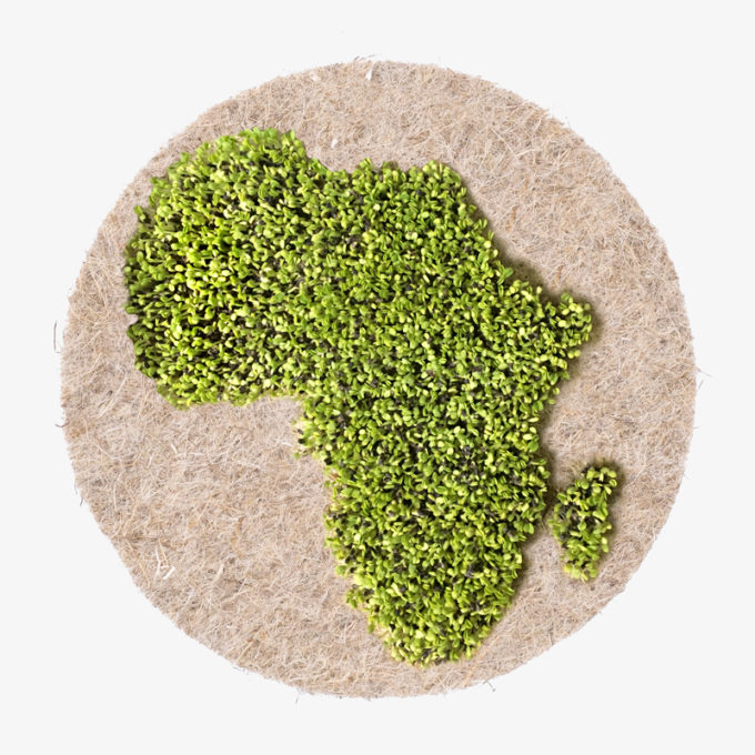 Afrika cress seed
