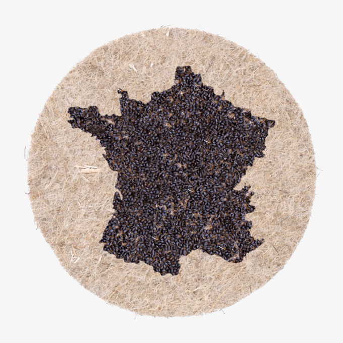 France country shape with seeds applied to hemp fibre pads. watering and growing
