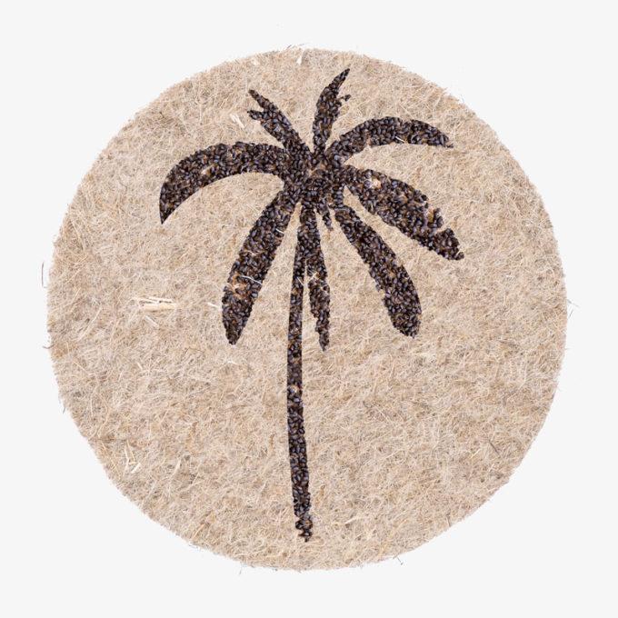 Palme aus Pflanzensamen zum giessen und wachsen lassen. Perfektes Geschenk. Sommerferien Geschenk