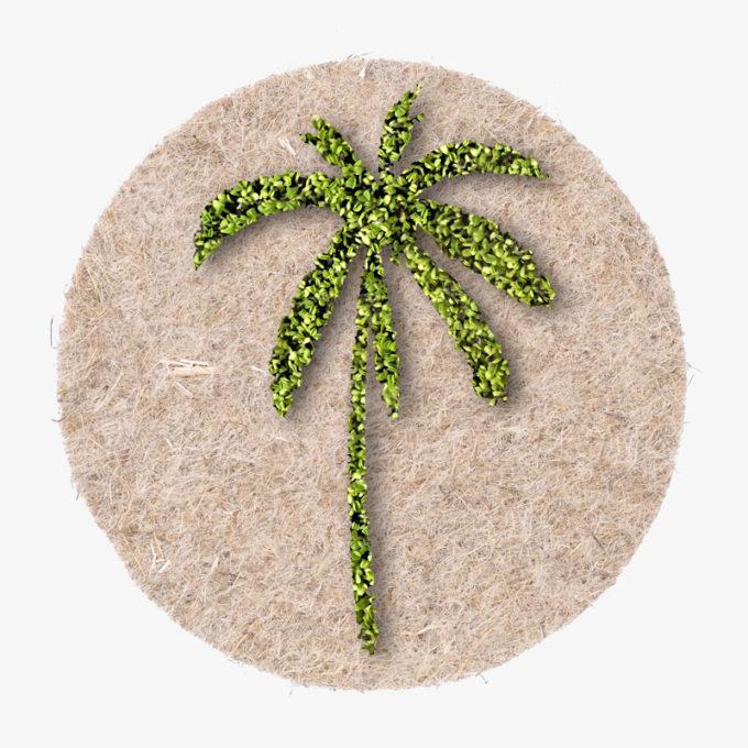 Palme aus Kresse zum wachsen lassen